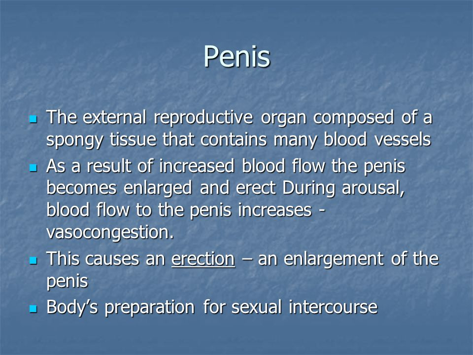 Penis The external reproductive organ composed of a spongy tissue that contains many blood vessels The external reproductive organ composed of a spong