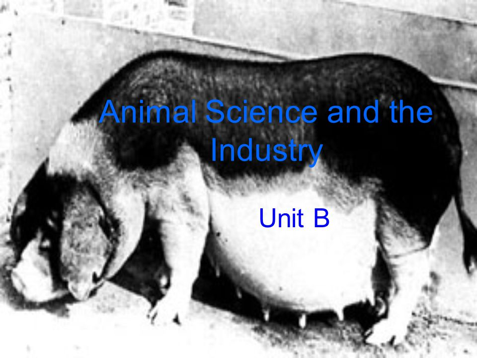 Animal Science and the Industry Unit B