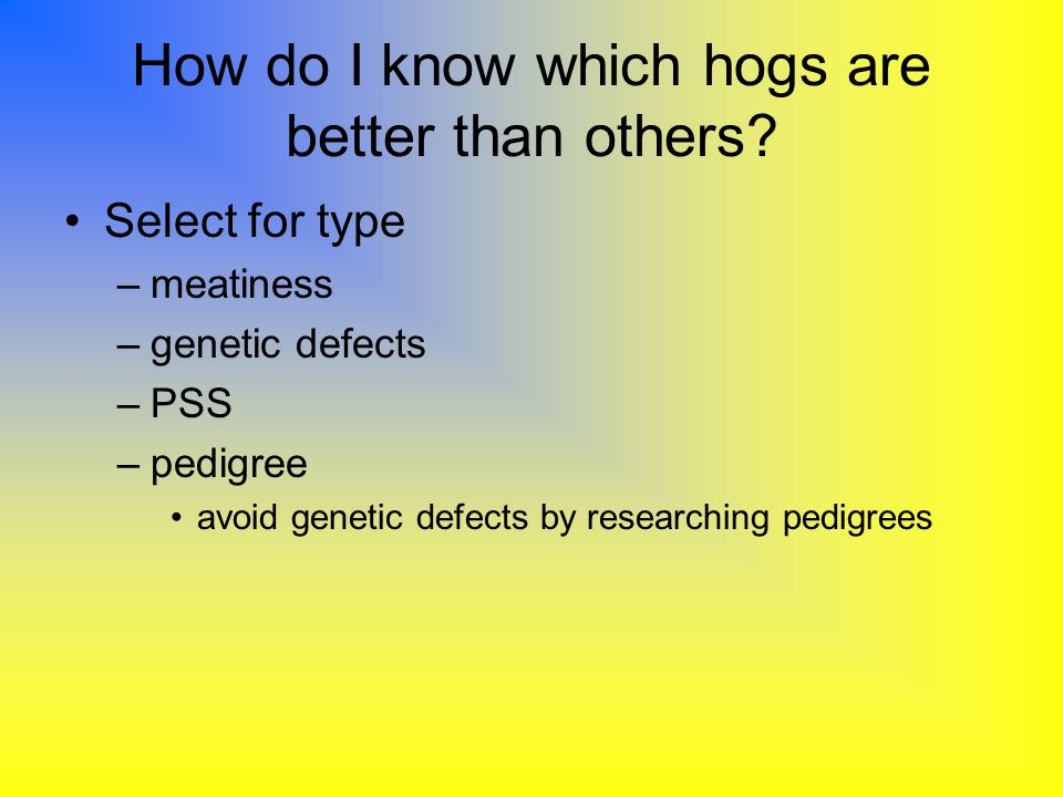 How do I know which hogs are better than others? Select for type –meatiness –genetic defects –PSS –pedigree avoid genetic defects by researching pedig