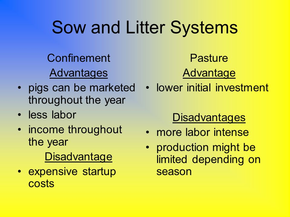 Sow and Litter Systems Confinement Advantages pigs can be marketed throughout the year less labor income throughout the year Disadvantage expensive st