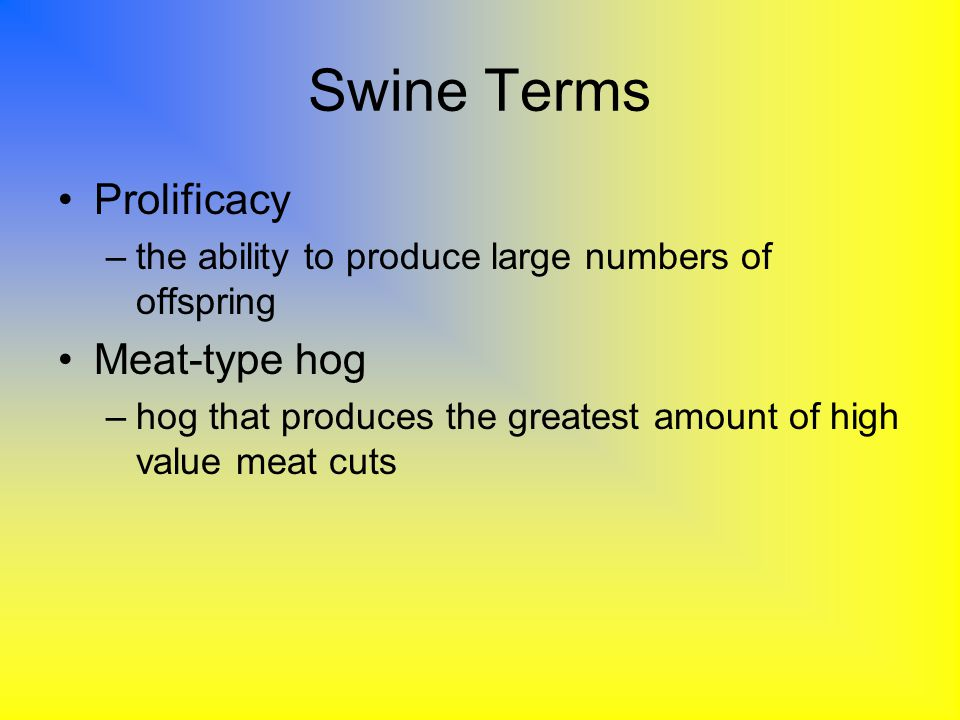 Swine Terms Prolificacy –the ability to produce large numbers of offspring Meat-type hog –hog that produces the greatest amount of high value meat cut