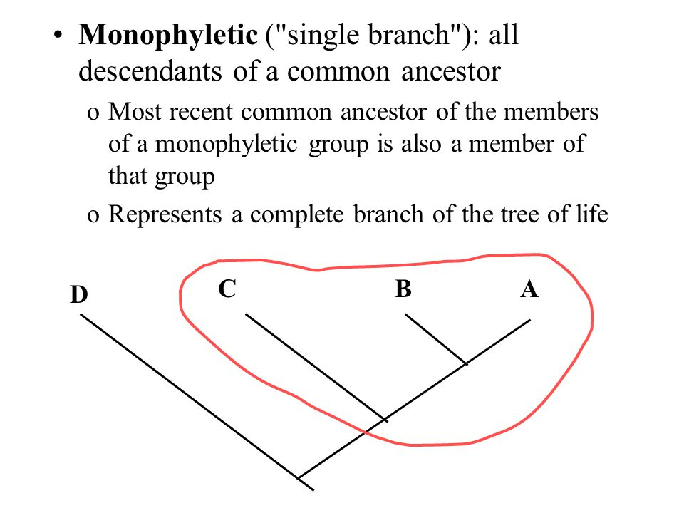 Monophyletic (