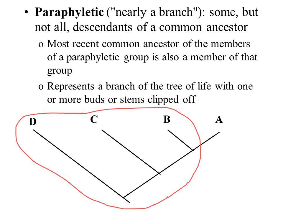 Paraphyletic (