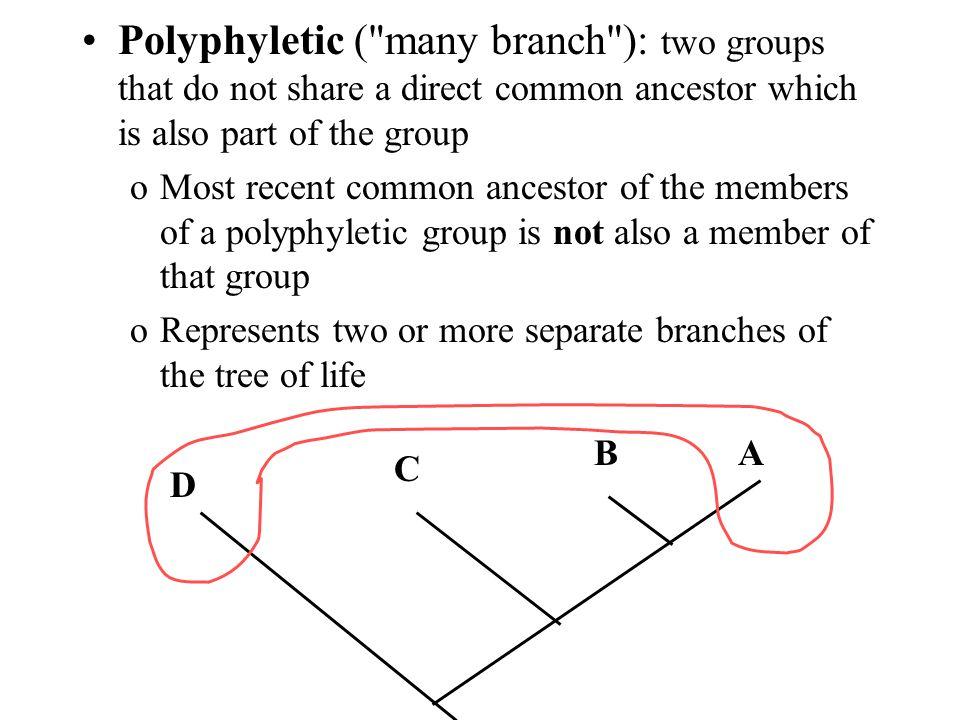 Polyphyletic (