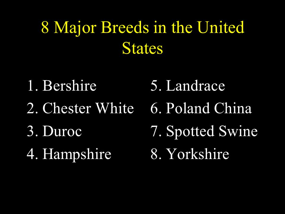 8 Major Breeds in the United States 1.Bershire 2.