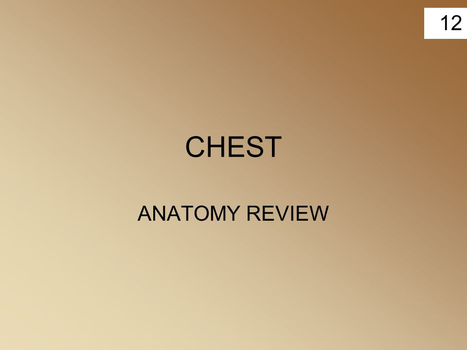 12 CHEST ANATOMY REVIEW
