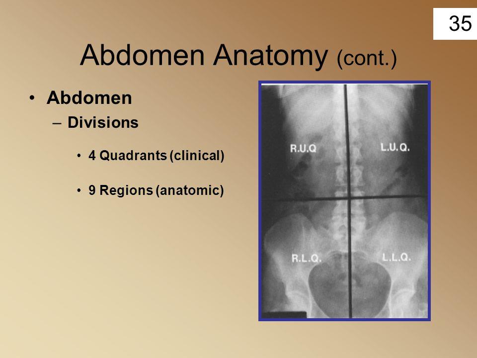 35 Abdomen Anatomy (cont.) Abdomen –Divisions 4 Quadrants (clinical) 9 Regions (anatomic)