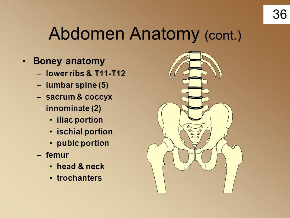 36 Abdomen Anatomy (cont.) Boney anatomy –lower ribs & T11-T12 –lumbar spine (5) –sacrum & coccyx –innominate (2) iliac portion ischial portion pubic