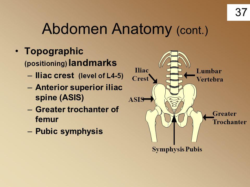 37 Abdomen Anatomy (cont.) Topographic (positioning) landmarks –Iliac crest (level of L4-5) –Anterior superior iliac spine (ASIS) –Greater trochanter