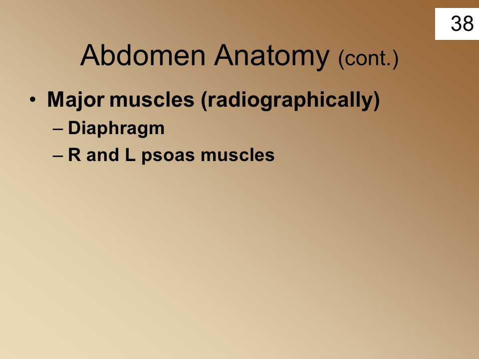 38 Abdomen Anatomy (cont.) Major muscles (radiographically) –Diaphragm –R and L psoas muscles