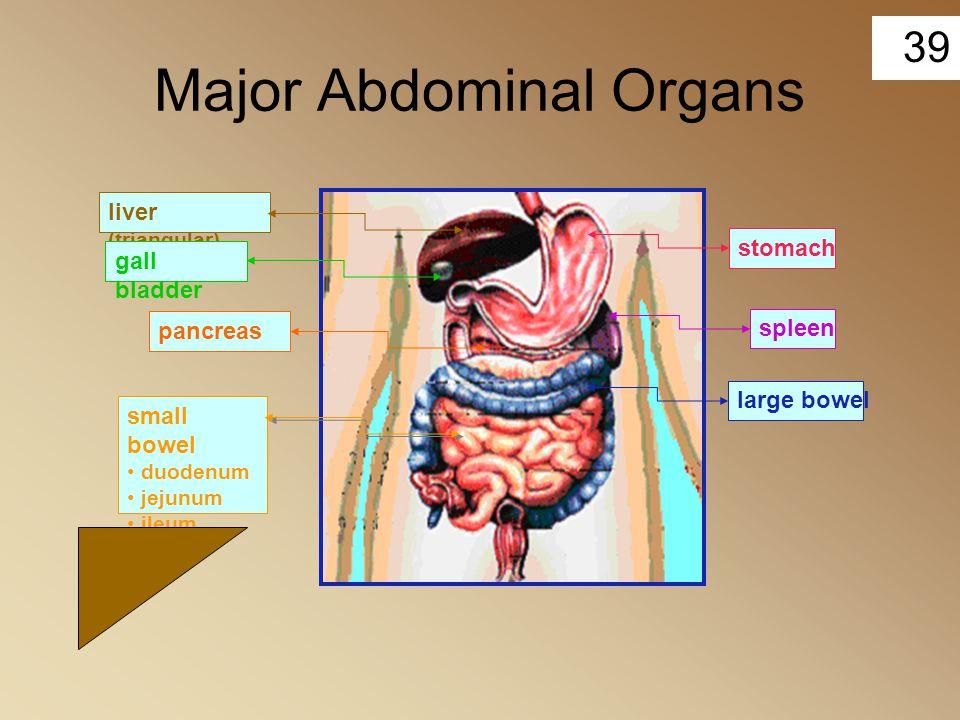 39 Major Abdominal Organs stomachlarge bowelspleensmall bowel duodenum jejunum ileum liver (triangular) gall bladder pancreas