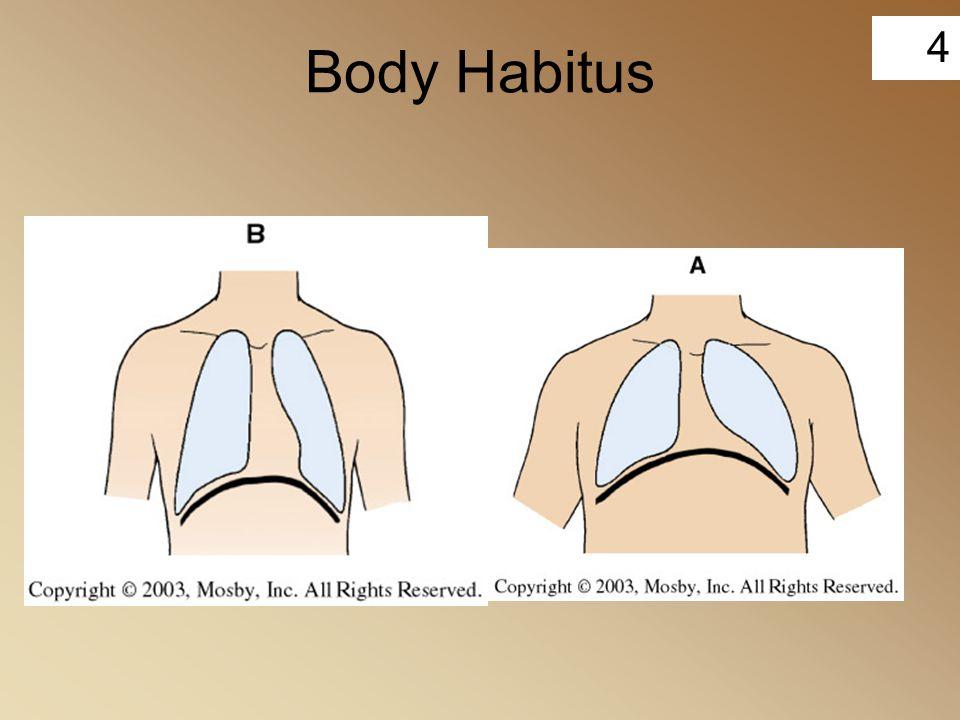 4 Body Habitus