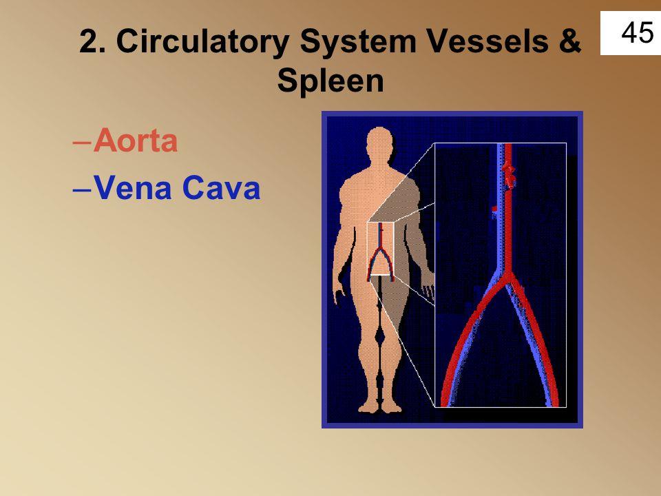 45 2. Circulatory System Vessels & Spleen –Aorta –Vena Cava