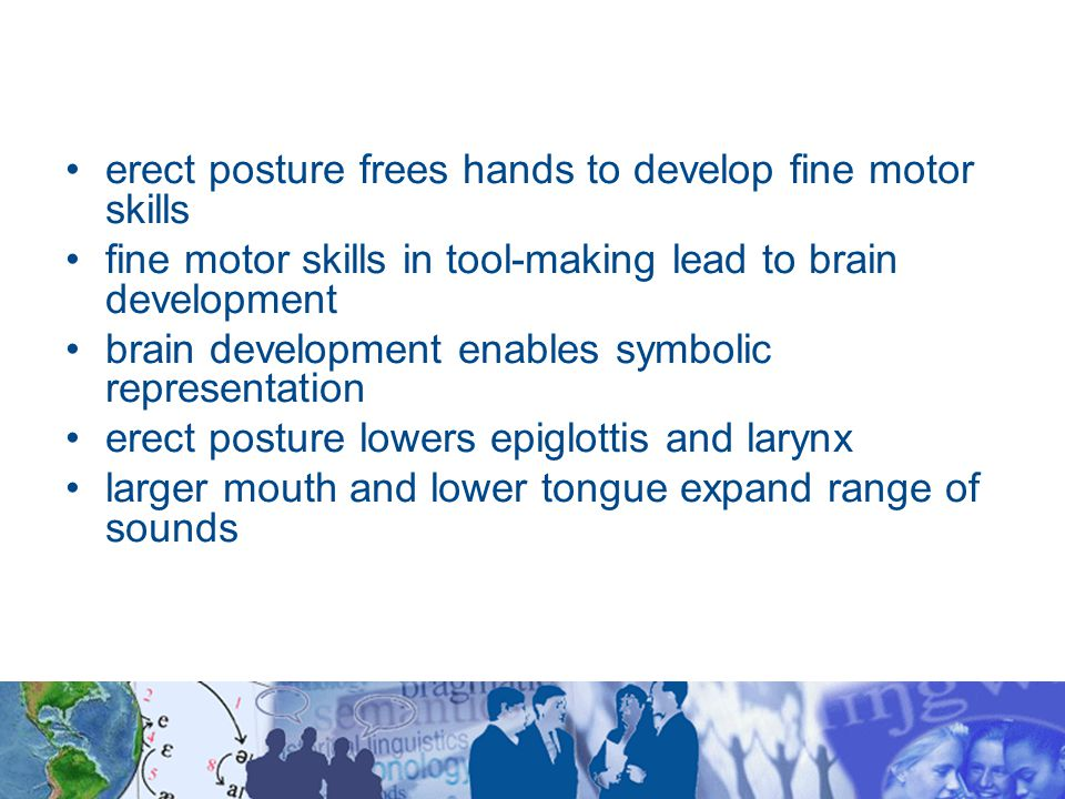 erect posture frees hands to develop fine motor skills fine motor skills in tool-making lead to brain development brain development enables symbolic representation erect posture lowers epiglottis and larynx larger mouth and lower tongue expand range of sounds