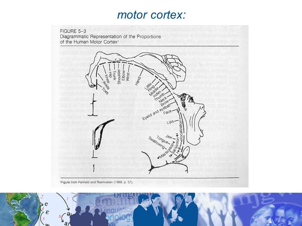 motor cortex: