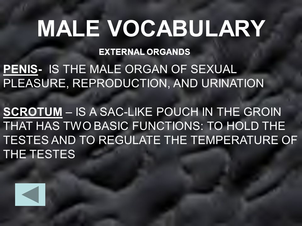 INTERNAL ANATOMY TESTES – ARE THE TWO MALE REPRODUCTIVE GLANDS INSIDE THE SCROTUM THAT SECRETE THE MALE HORMONE TESTOSTERONE AND PRODUCE SPERM.