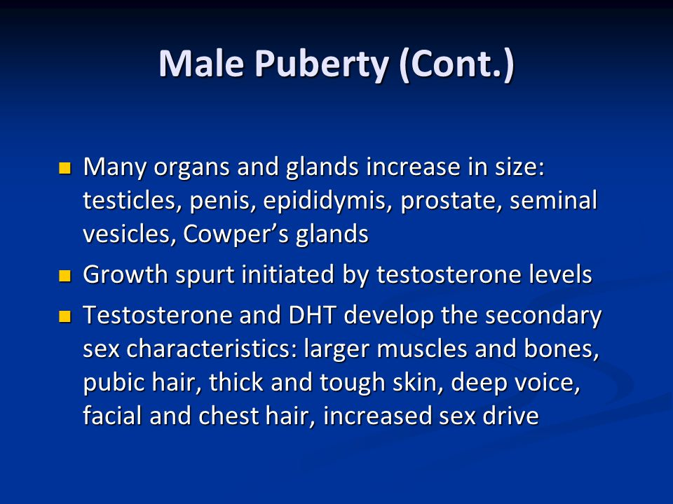 Male Puberty (Cont.) Many organs and glands increase in size: testicles, penis, epididymis, prostate, seminal vesicles, Cowper's glands Many organs an
