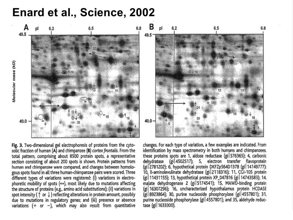 Enard et al., Science, 2002