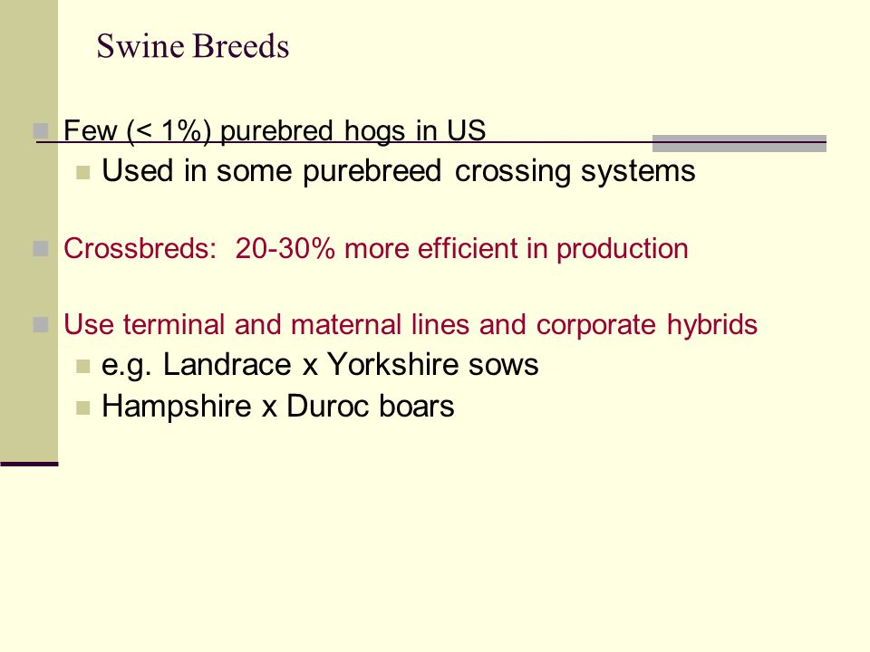 Swine Breeds Few (< 1%) purebred hogs in US Used in some purebreed crossing systems Crossbreds: 20-30% more efficient in production Use terminal and maternal lines and corporate hybrids e.g.