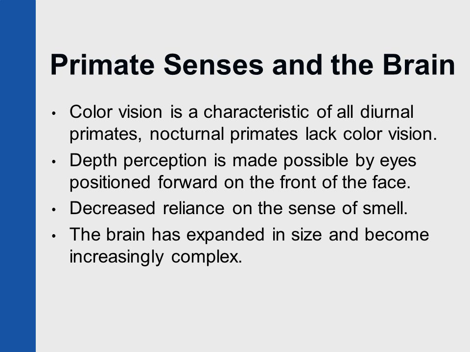 Primate Senses and the Brain Color vision is a characteristic of all diurnal primates, nocturnal primates lack color vision. Depth perception is made