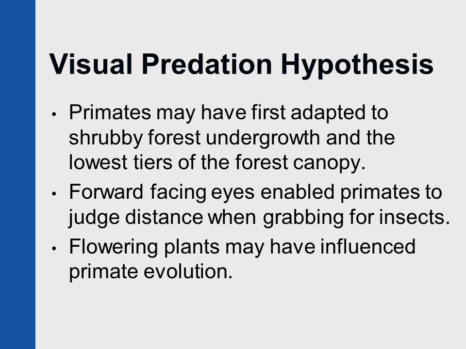 Visual Predation Hypothesis Primates may have first adapted to shrubby forest undergrowth and the lowest tiers of the forest canopy. Forward facing ey