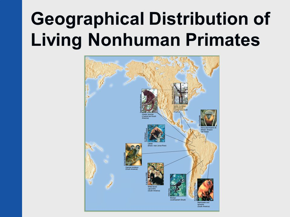Geographical Distribution of Living Nonhuman Primates