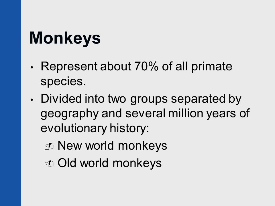 Monkeys Represent about 70% of all primate species. Divided into two groups separated by geography and several million years of evolutionary history:
