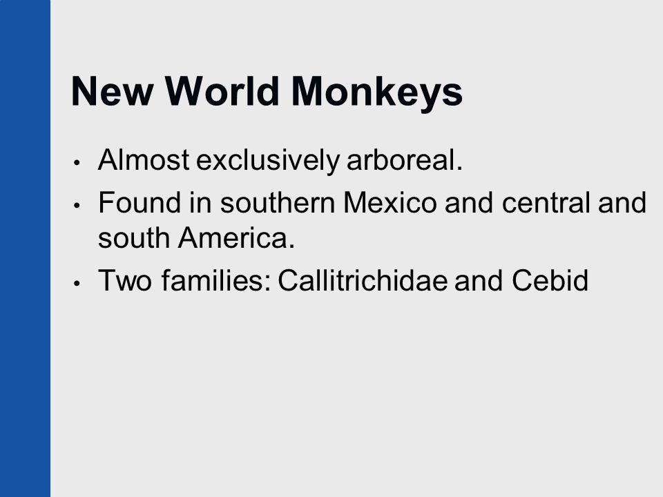 New World Monkeys Almost exclusively arboreal. Found in southern Mexico and central and south America. Two families: Callitrichidae and Cebid