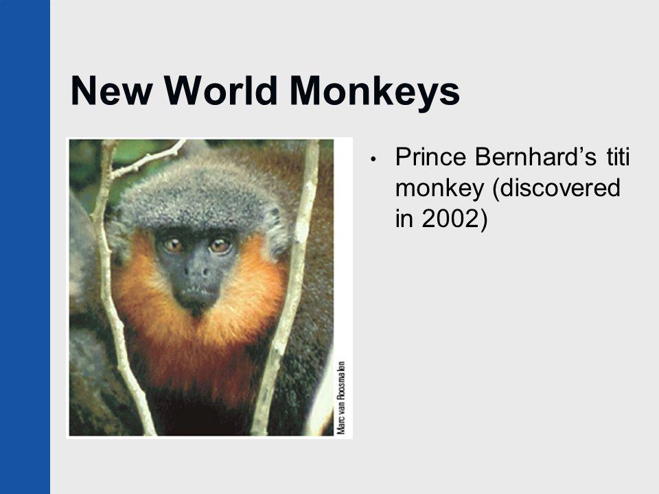 New World Monkeys Prince Bernhard's titi monkey (discovered in 2002)