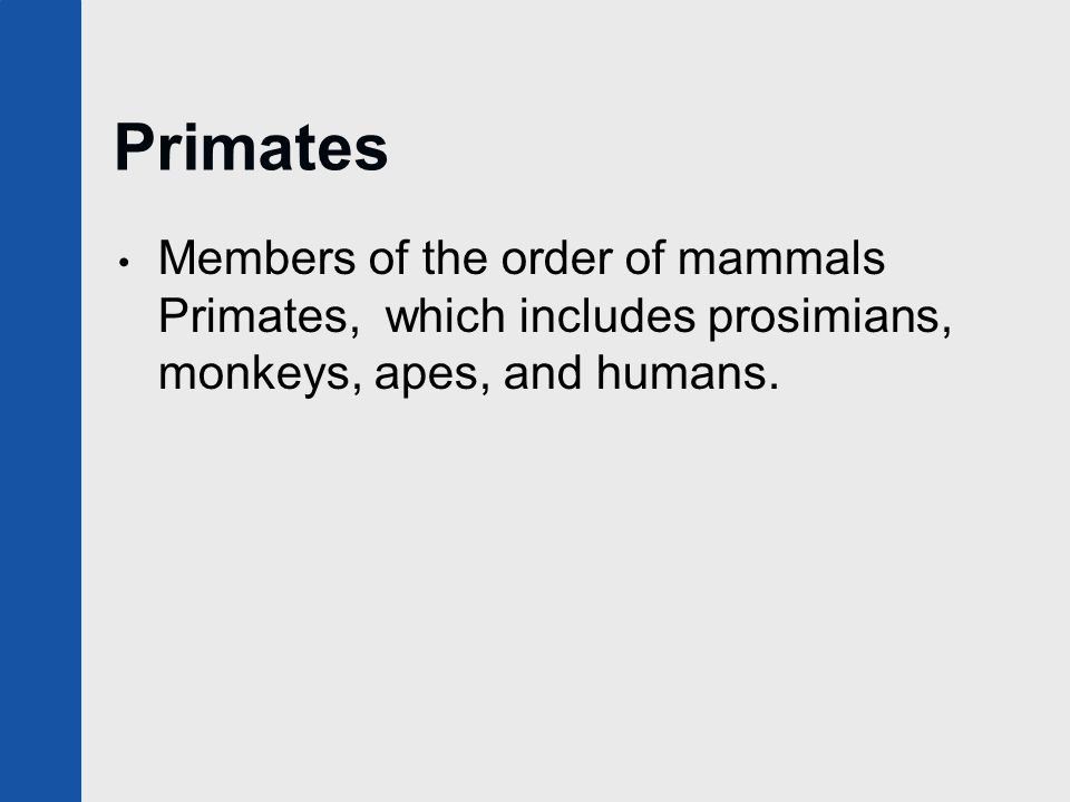 Anthropoids Members of a suborder of Primates, the Anthropoidea.