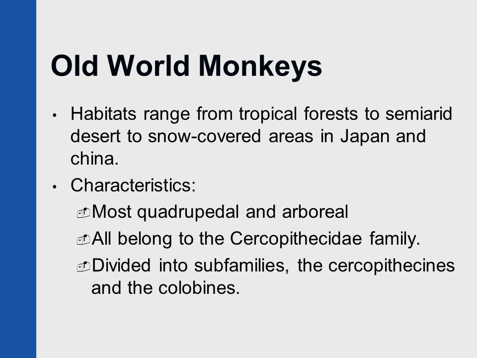 Old World Monkeys Habitats range from tropical forests to semiarid desert to snow-covered areas in Japan and china. Characteristics:  Most quadrupeda