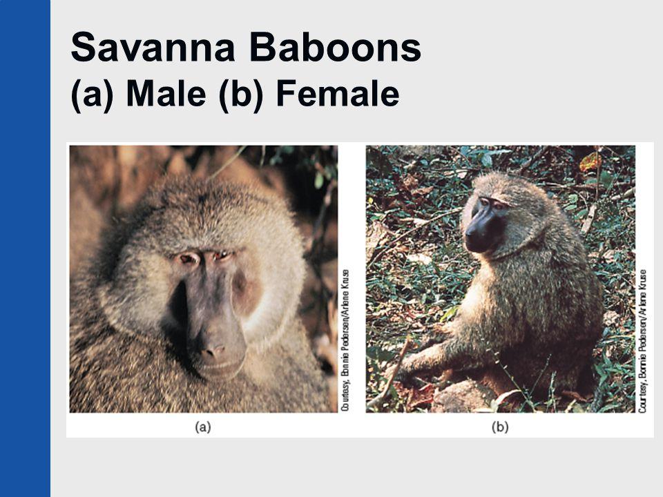 Savanna Baboons (a) Male (b) Female