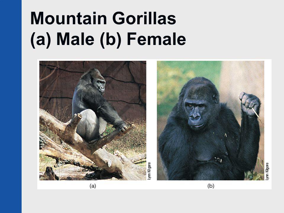 Mountain Gorillas (a) Male (b) Female