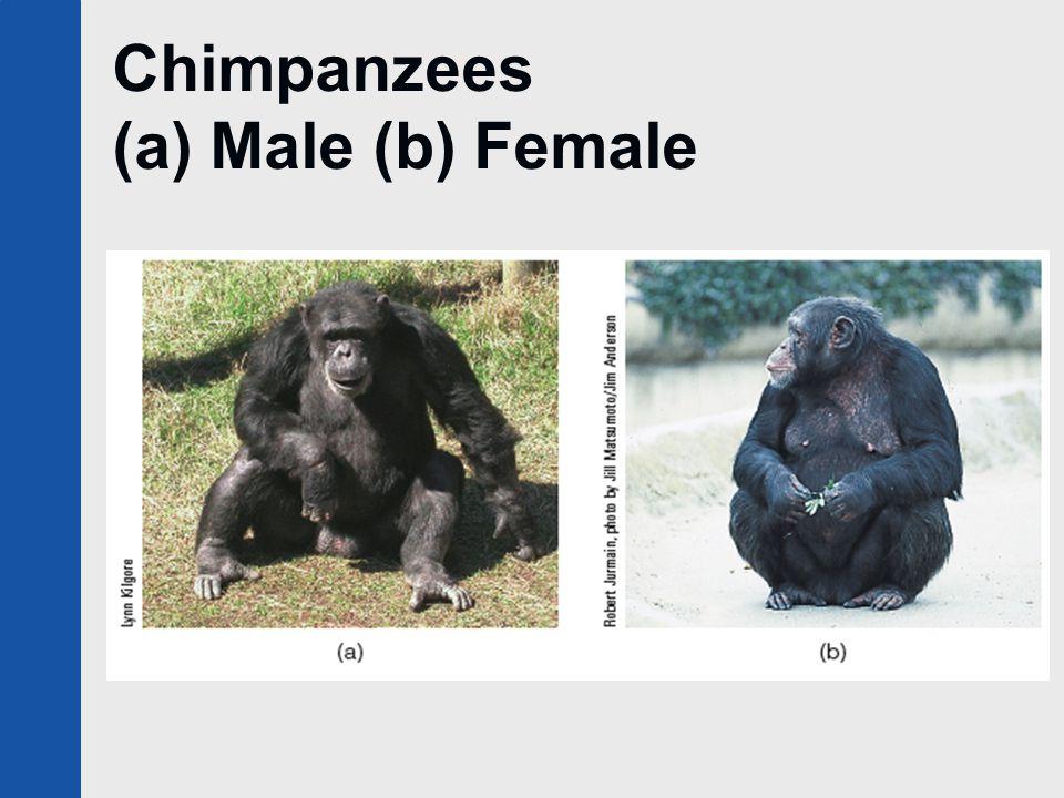 Chimpanzees (a) Male (b) Female