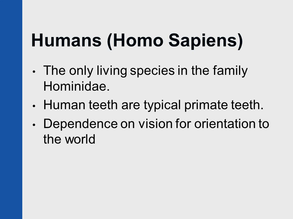 Humans (Homo Sapiens) The only living species in the family Hominidae. Human teeth are typical primate teeth. Dependence on vision for orientation to