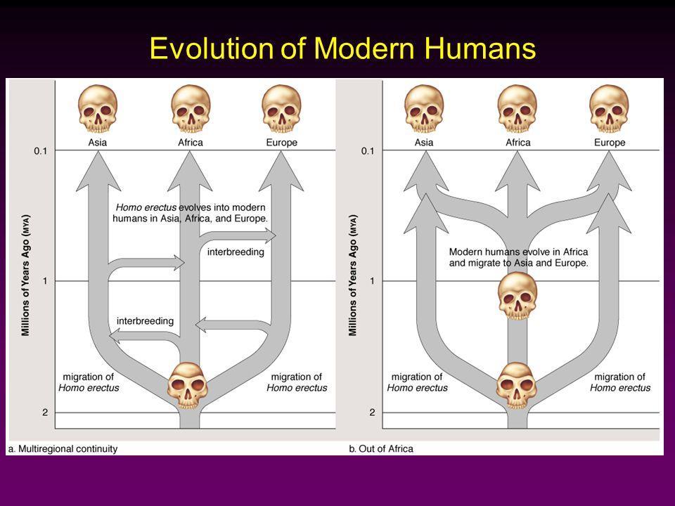 Evolution of Modern Humans