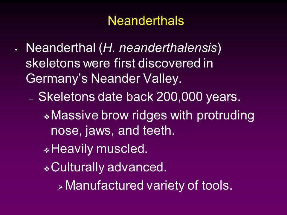 Neanderthals Neanderthal (H.
