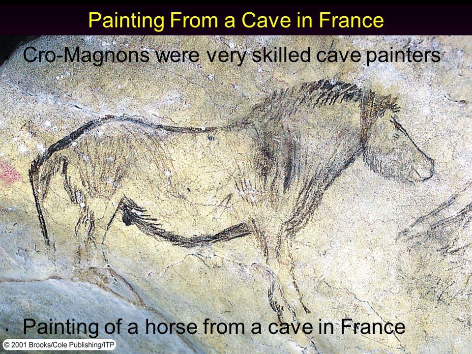 Cro-Magnons were very skilled cave painters Painting of a horse from a cave in France Painting From a Cave in France