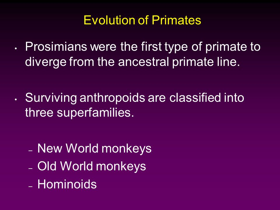 Evolution of Primates Prosimians were the first type of primate to diverge from the ancestral primate line.