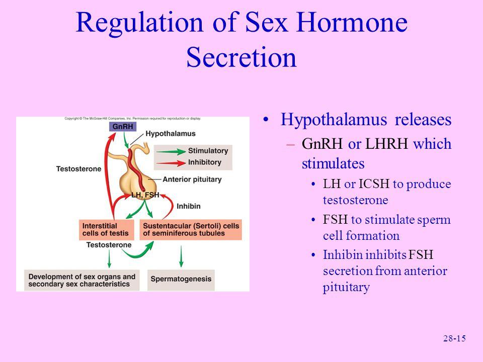 28-15 Regulation of Sex Hormone Secretion Hypothalamus releases –GnRH or LHRH which stimulates LH or ICSH to produce testosterone FSH to stimulate spe