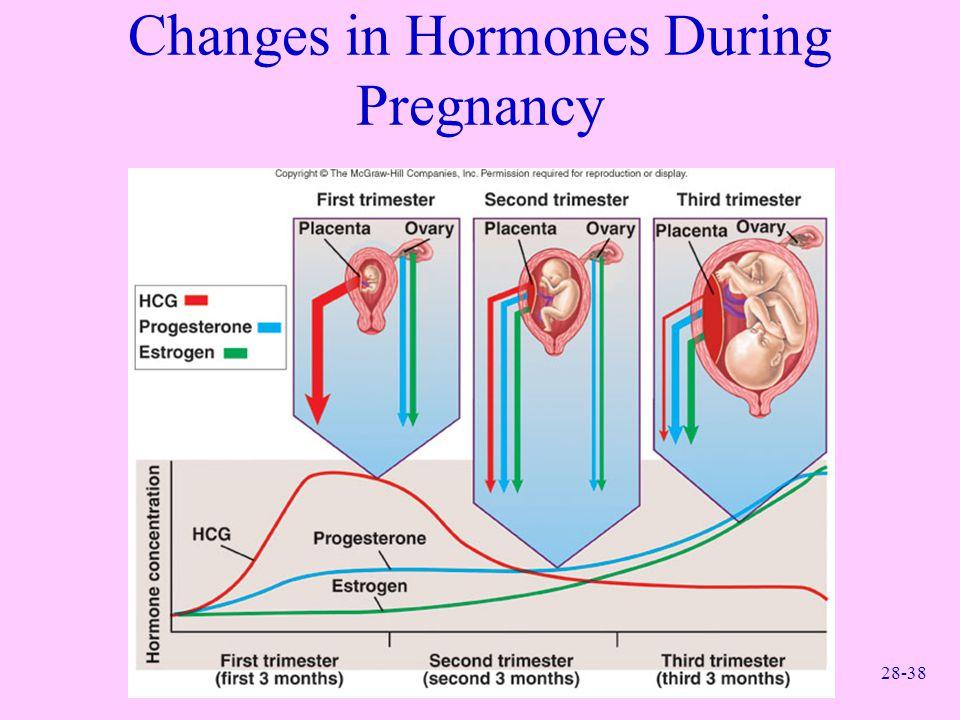 28-38 Changes in Hormones During Pregnancy