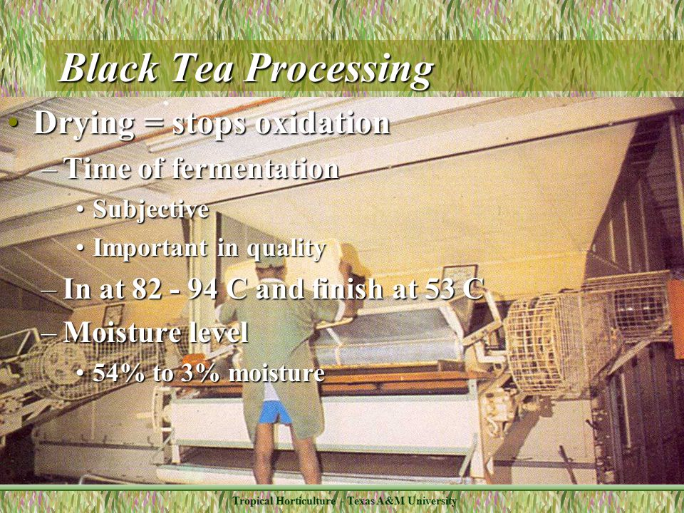 Tropical Horticulture - Texas A&M University Black Tea Processing Drying = stops oxidationDrying = stops oxidation –Time of fermentation SubjectiveSubjective Important in qualityImportant in quality –In at 82 - 94 C and finish at 53 C –Moisture level 54% to 3% moisture54% to 3% moisture