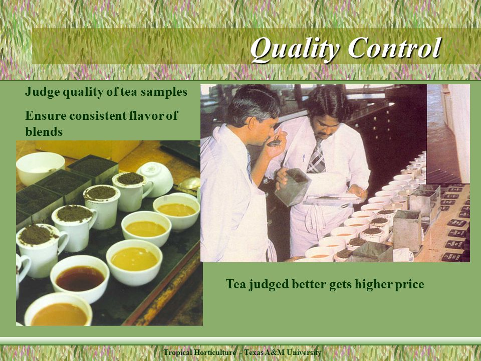 Tropical Horticulture - Texas A&M University Quality Control Judge quality of tea samples Ensure consistent flavor of blends Tea judged better gets higher price