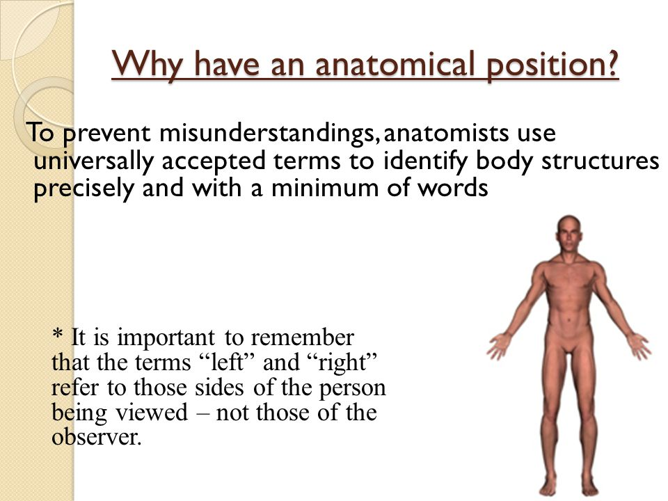 Why have an anatomical position.