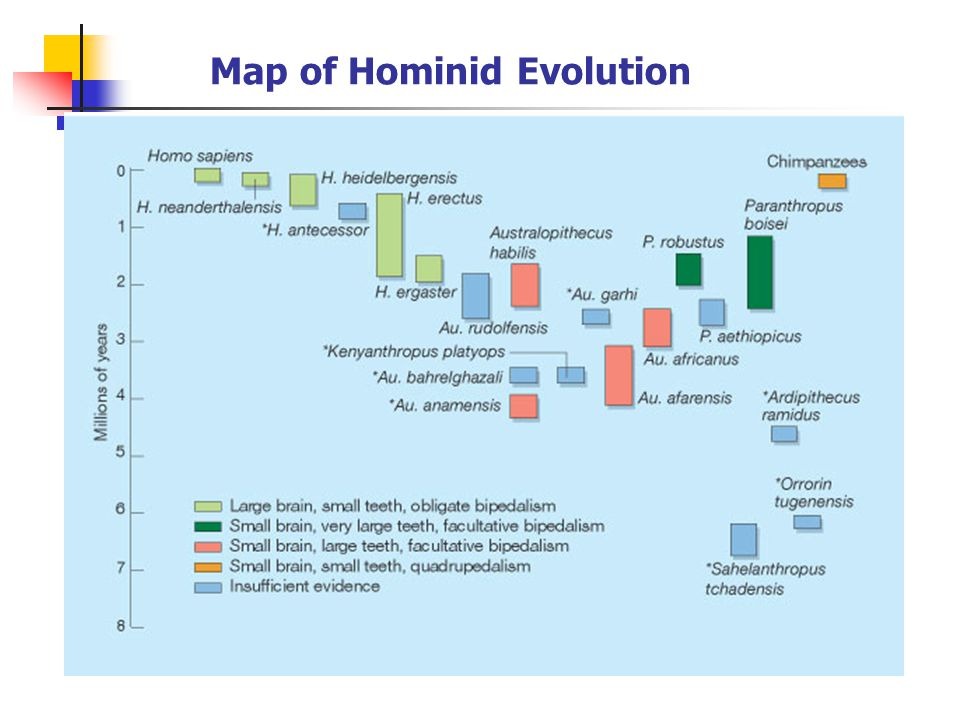 What is a Hominid? Modern humans & our direct and indirect ancestors (after our lineage split from the chimpanzee) In the last decade, the time range