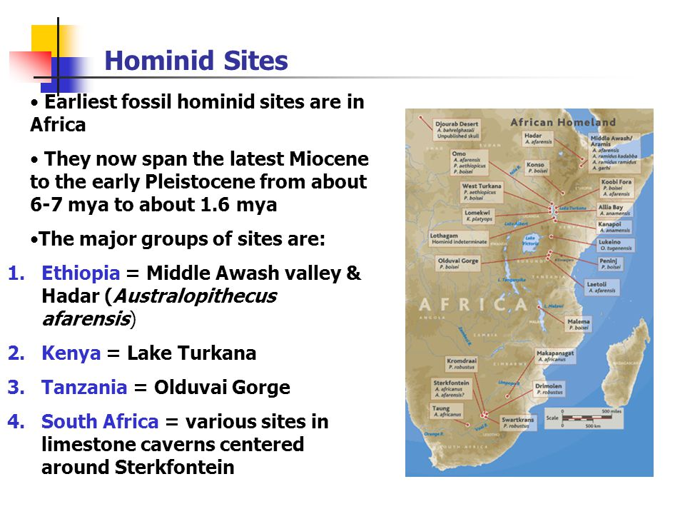 Hominid Sites Earliest fossil hominid sites are in Africa They now span the latest Miocene to the early Pleistocene from about 6-7 mya to about 1.6 mya The major groups of sites are: 1.Ethiopia = Middle Awash valley & Hadar (Australopithecus afarensis) 2.Kenya = Lake Turkana 3.Tanzania = Olduvai Gorge 4.South Africa = various sites in limestone caverns centered around Sterkfontein