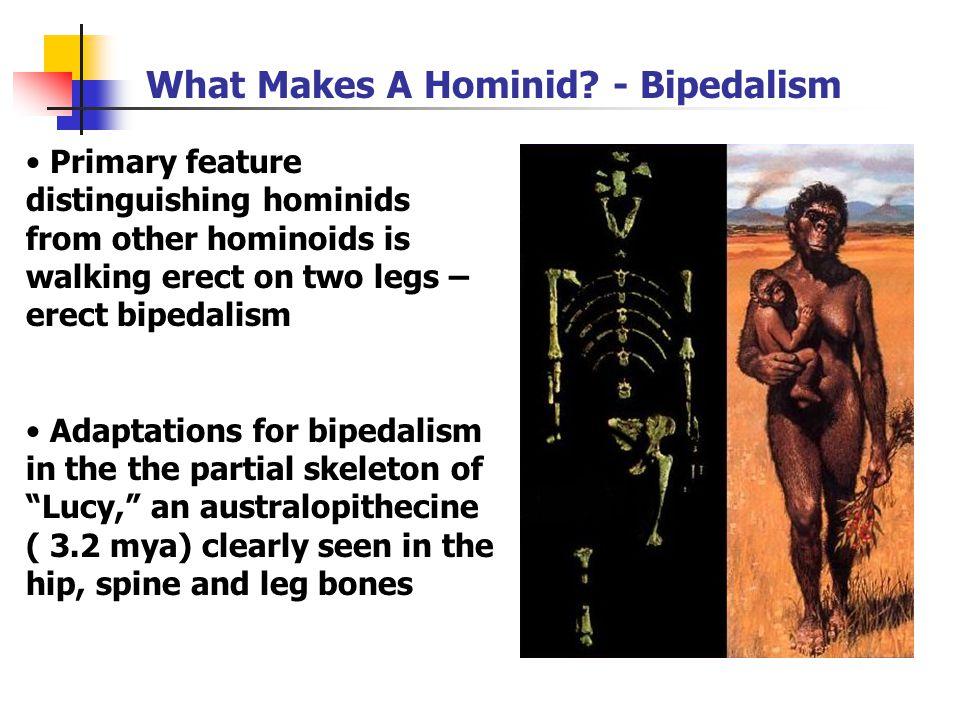 Second Adaptive Radiation 4-5 mya in early Pliocene, first true hominids 1.