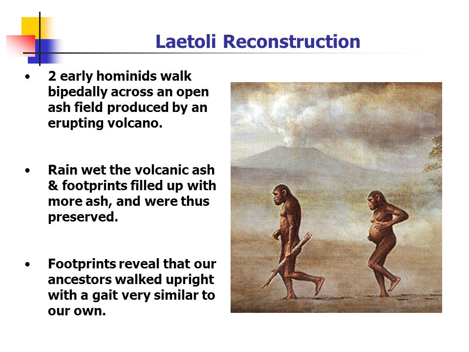 2 early hominids walk bipedally across an open ash field produced by an erupting volcano.