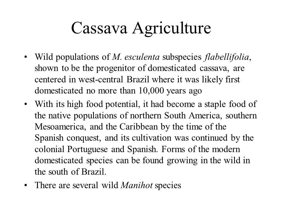 Cassava Agriculture Wild populations of M.