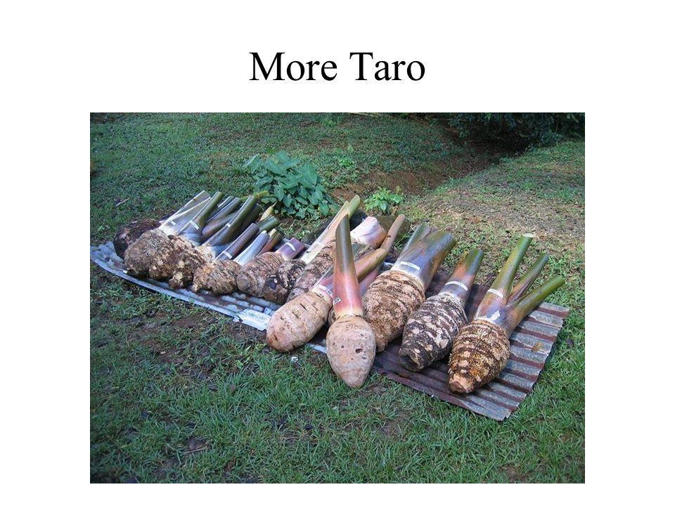 More Taro